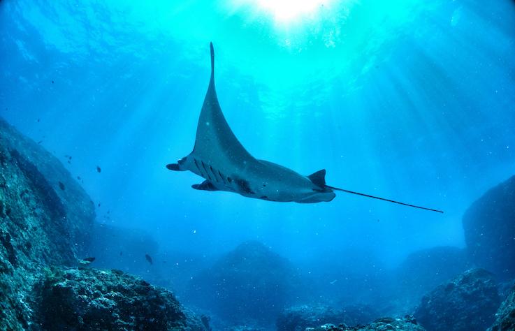 一起認識美麗海島—帛琉!