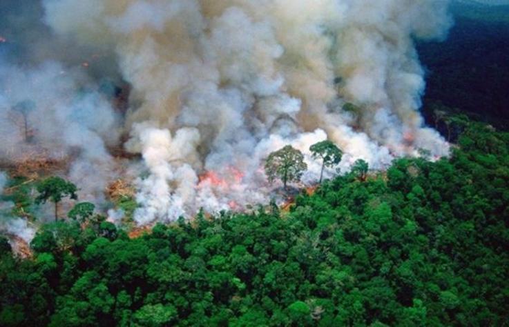 【3 分鐘看世界】亞馬遜雨林延燒 16 天,李奧納多斥責全球媒體靜悄悄