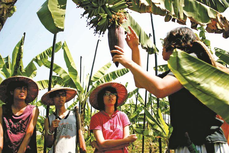 「台青蕉」的圖片搜尋結果